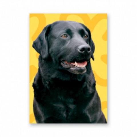 Labrador (black) card with yellow background